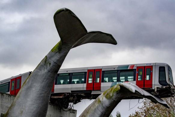 treno-deraglia-balena